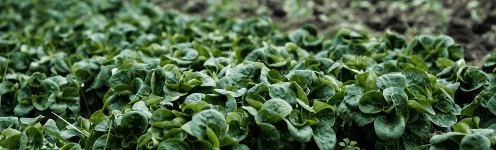 Len Wright Salads